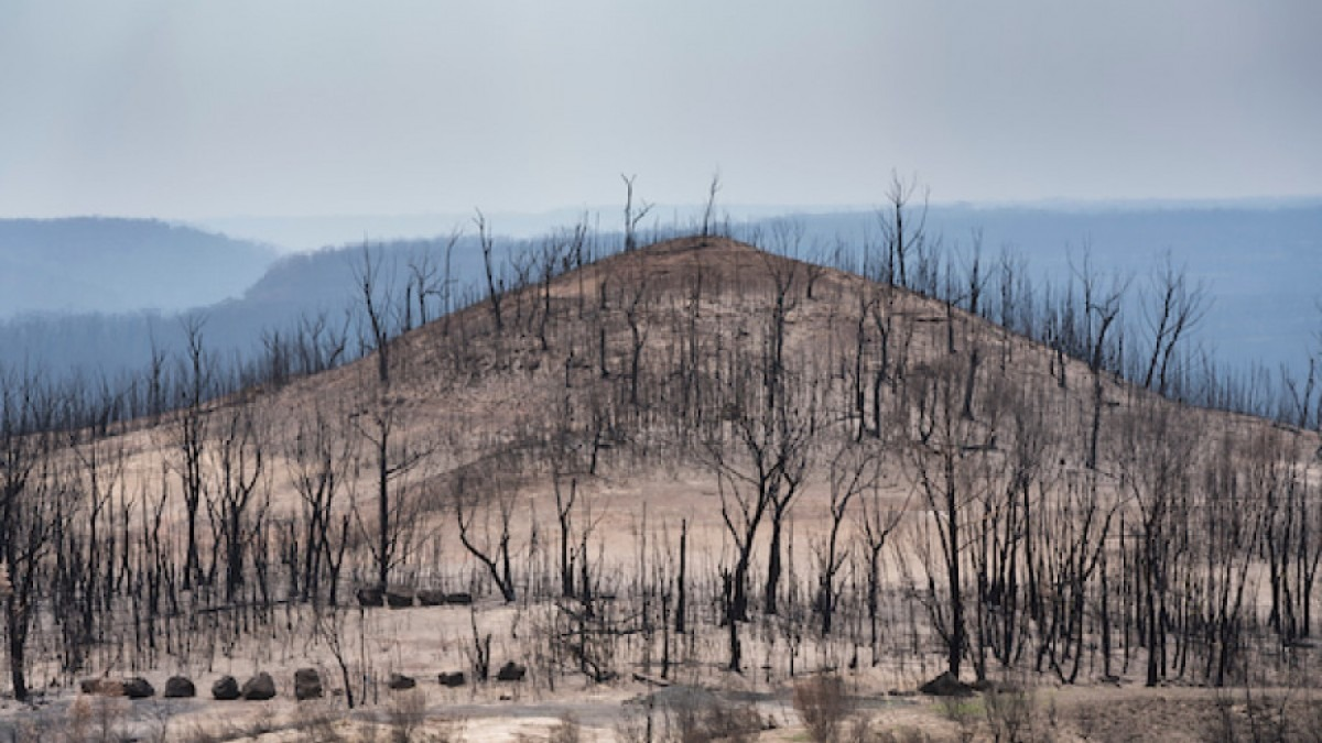 Photo of burned landscape