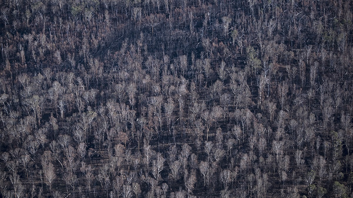 Charred landscape by James Walsh