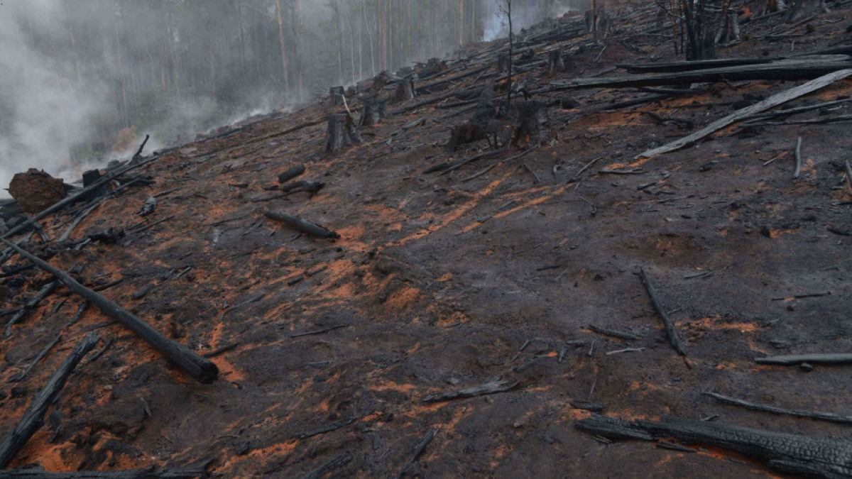 Charred Australian landscape post bushfires.