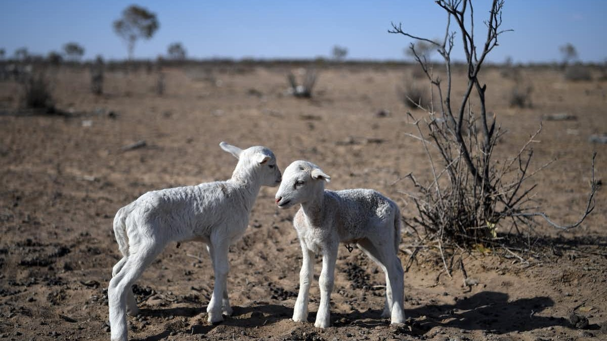 Australia's environment degraded under extreme drought in 2019. Dan Peled/AAP