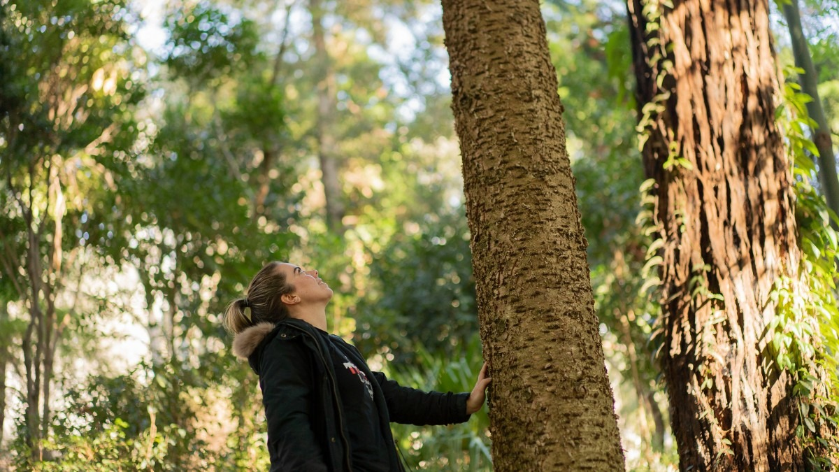 Kristi Lee looks up at a bunya pine tree