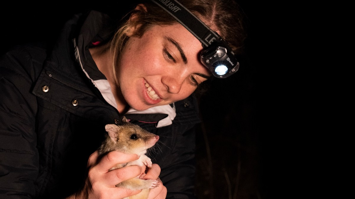 Kristi Lee holding a quolla at Mulligans Flat Sanctuary