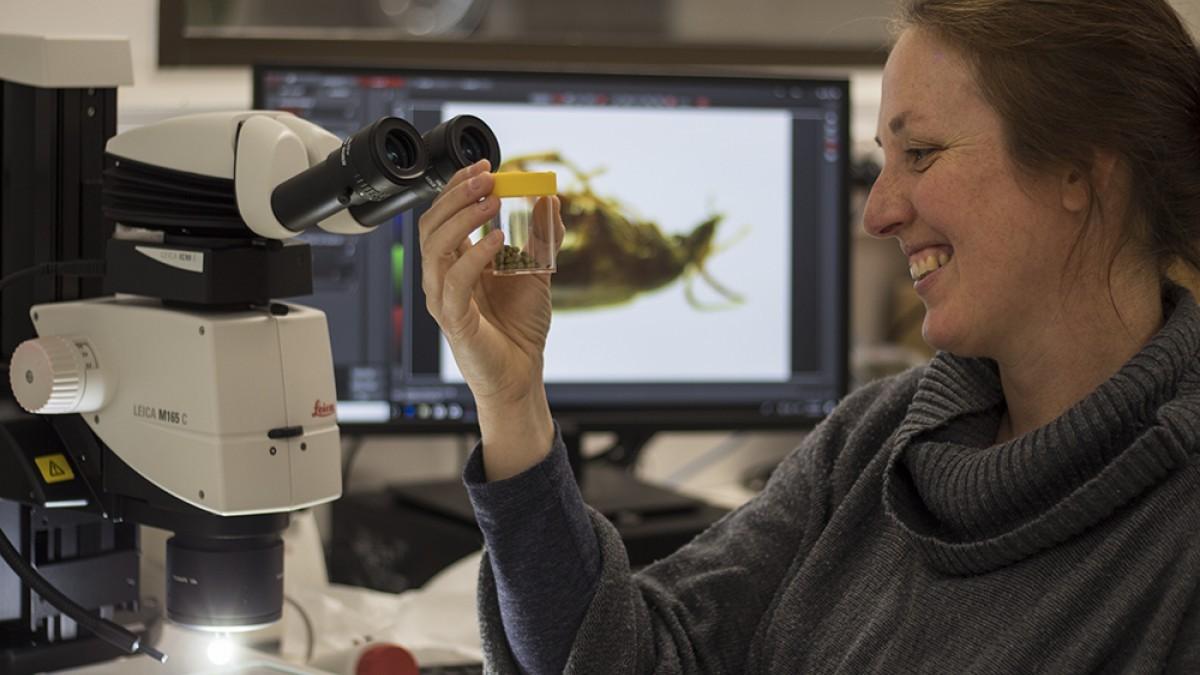 Dr Megan Head at a microscope
