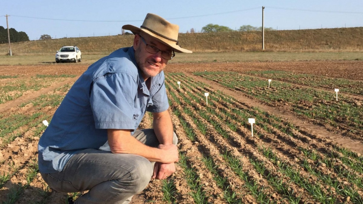Professor Barry Pogson is in agricultural field with rows of seedlings.
